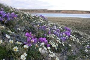 Life, water, sky, Banks Island, Arctic Ocean