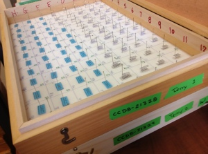 Loading up a box of chloropid flies for barcoding