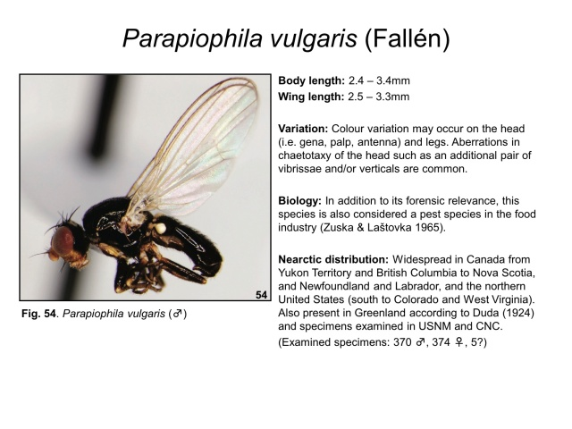 A species page from Rochefort et al. (2015)